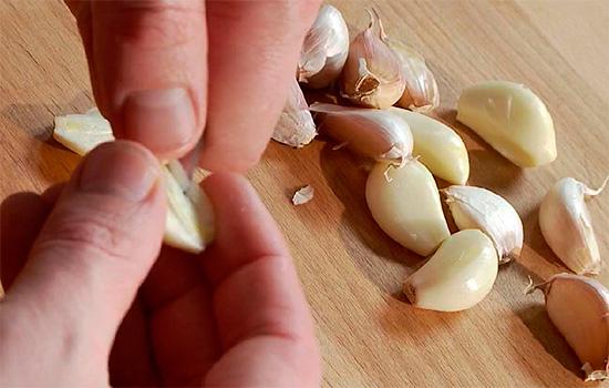 Если примотать чеснок к руке, как это советуют сделать народные рецепты, то от зубной боли такой прием, разумеется, в большинстве случаев никак не поможет.