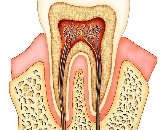 Нередко боль может возникать вследствие воспалительных процессов в пульпе зуба